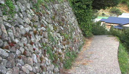 マキの家への道m.jpg