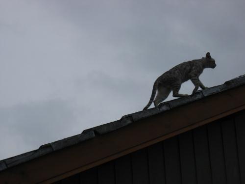 屋敷町のネコ