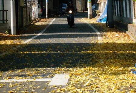 落ち葉の道.JPG