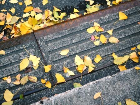 落ち葉の道3.JPG