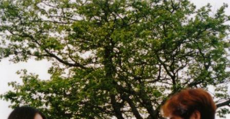 運命の木.jpg