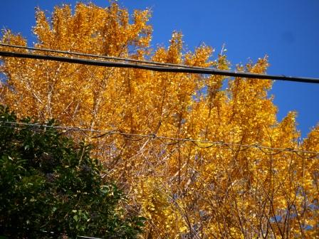 紅葉の木々2.JPG