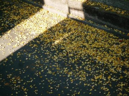 落ち葉の道2.JPG