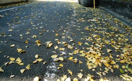 落ち葉の道4.JPG